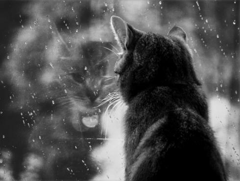 Rain Cat