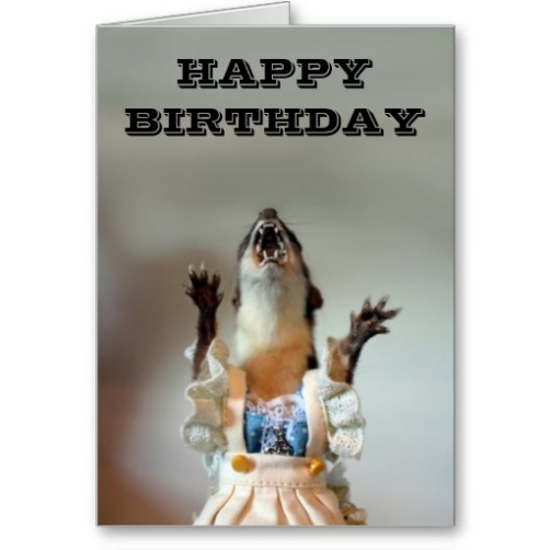 Image result for mongoose birthday
